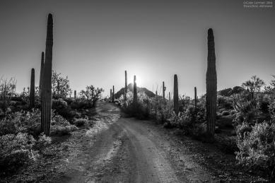 Sonoran Desert Road at Sunset